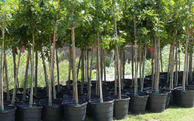 Articles-Tree-Planting-02-29-16