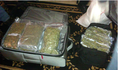Cannabis in a Suitcase